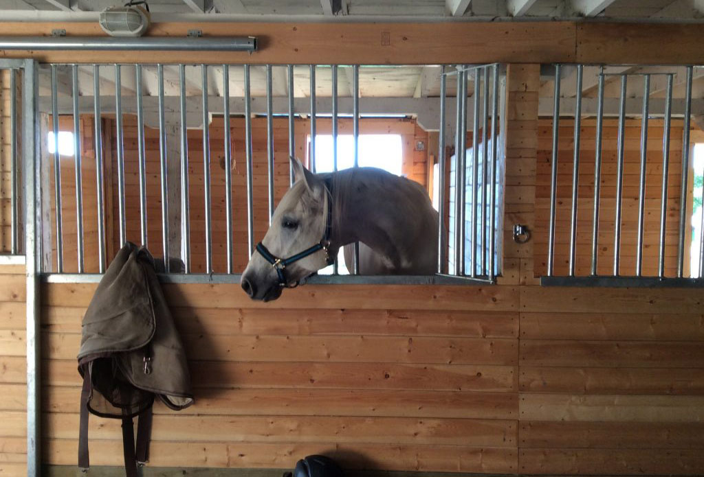 CC Stables | Horse Boarding & Arena